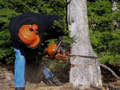 massachusetts unlawful tree cutting